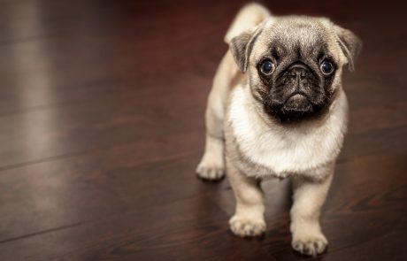 אפליקציה חדשה מאפשרת לכם לאתר פנסיון לכלבים ולהזמין שירות להוצאת הכלב